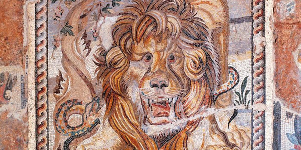 domus-leone
